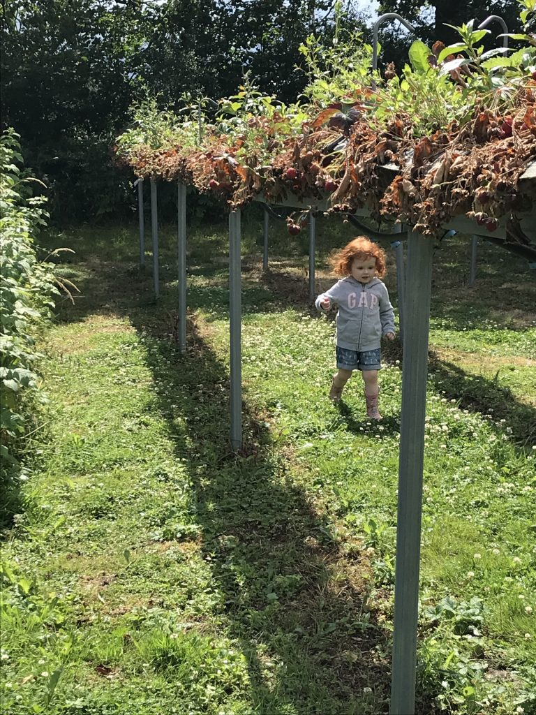 A photo of a girl running between rows of strawberry plants